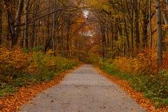 柏油路在一个美丽的秋天森林里 库存图片