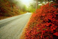 柏油路在秋天森林里,根据温暖的阳光 库存照片