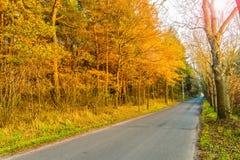 柏油路在金黄秋天森林里 免版税库存图片