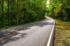 柏油路曲线通过与阳光的绿色林木 免版税库存照片