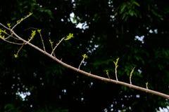 柏油路曲线通过与阳光的绿色林木 库存照片