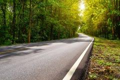 柏油路曲线通过与阳光的绿色林木 免版税库存图片