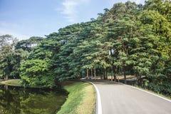 柏油路美丽的景色在华美的树和湖之间的,在好日子 r 免版税库存照片