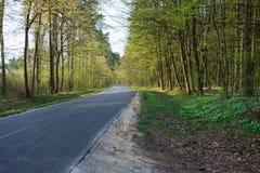 柏油路通过一个开花的森林 免版税库存照片