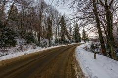 柏油路通过冬天森林 免版税图库摄影