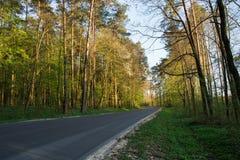 柏油路通过太阳由后照的森林 库存图片