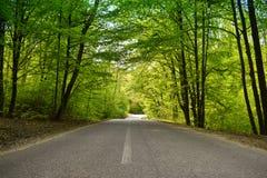 柏油路通过绿色森林在一个晴朗的春日 免版税库存图片