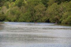 黄柏的爱尔兰河李与划独木舟的人 免版税库存照片