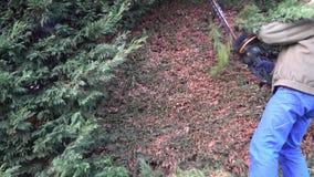 柏Leylandia从事园艺的工作切口生活篱芭  影视素材