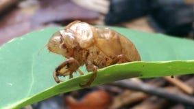 某一昆虫在森林里蜕变了 库存照片