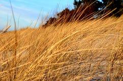 某事去的自然美好和更加美好 免版税图库摄影