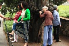 某些人紧贴对'不可思议的'木头在公园 库存图片