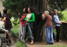 某些人紧贴对'不可思议的'木头在公园 免版税库存照片