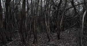 某人设法穿过死的森林 股票视频