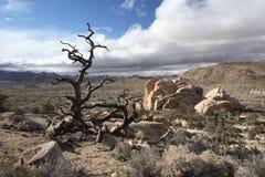 某处沙漠视图西部美国 库存照片