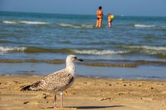 某处,在海之外! 免版税图库摄影