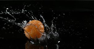柑桔,柑橘reticulata,结果实落在水反对黑背景, 股票录像