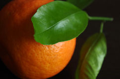 柑桔 免版税图库摄影