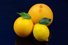 柑橘。 免版税库存图片