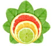 柑橘交叉果子绿色叶子 库存图片