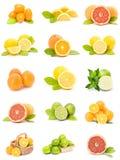 柑橘收集果子 免版税图库摄影