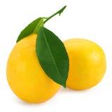 柑橘新鲜的柠檬 图库摄影