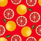 柑橘无缝的样式用葡萄柚 免版税库存图片