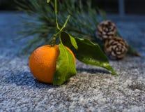 柑橘果子蜜桔和两棵杉木锥体在冬天 库存图片