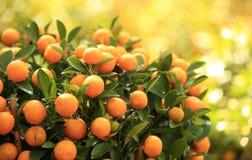 柑橘桔子 库存照片