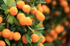 柑橘桔子 库存图片
