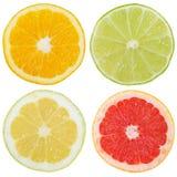 柑橘水果橙色柠檬切片被切的正方形的汇集是 免版税图库摄影