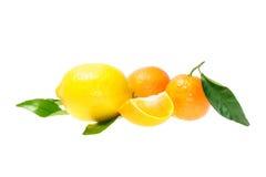 柑橘水果 免版税图库摄影