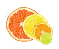 柑橘片式 免版税图库摄影