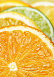 柑橘特写镜头果子 库存照片