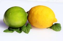 柑橘组合 免版税库存图片