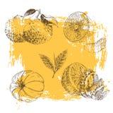柑橘水果剪影的葡萄酒墨水手拉的收藏-柠檬,蜜桔,橙色 免版税库存图片