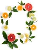 柑橘水果圈子  库存照片