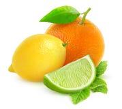 柑橘水果柠檬石灰桔子 免版税库存照片