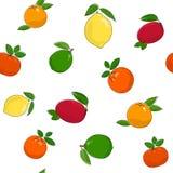柑橘水果的无缝的样式 图库摄影