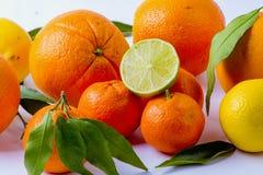 柑橘 免版税图库摄影
