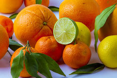 柑橘 免版税库存照片