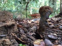 染料制造者错误马勃菌蘑菇 库存照片