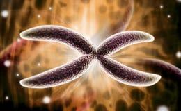 染色体 免版税库存照片