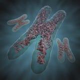 染色体x 免版税库存图片
