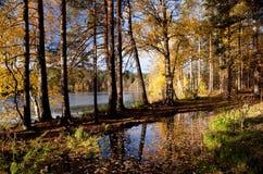 染黄在湖银行的秋天木头  免版税库存图片