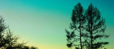 染黄天空的树和天蓝色 免版税库存图片