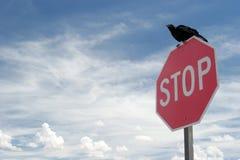 染黑乌鸦 免版税库存图片