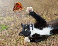 染黑蝴蝶演奏白色的猫全部赌注 库存图片