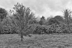 染黑在秋天风景的白色树与红色和橙色 图库摄影