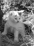 染黑小猫白色 免版税库存照片
